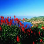 ncl_Eu_Portugal_Funchal_Madeira