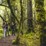 Cascade Creek Fiordland New Zealand Unspoiled Wilderness 100% Pure Cruise & Travel Depot LLC