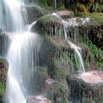 CFS22-Whirinaki-Forest-Park-Canterbury-Whirinaki-Rainforest-Experiences